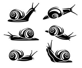 Snail set. Vector