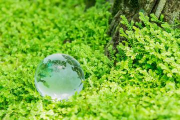Glass globe in green grass