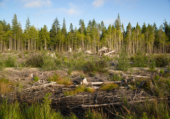 Logging Clear-cut Northwest Woods
