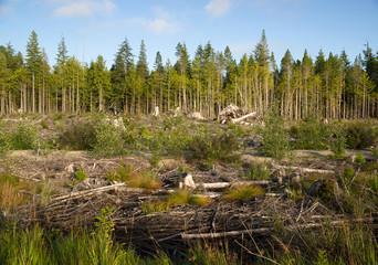 Logging Clear-cut Northwest Woods