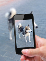 photo self dog with smartphone