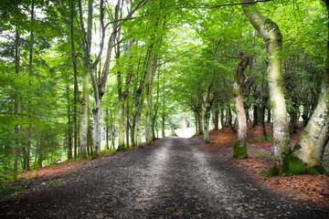 strada nel bosco - fototapety na wymiar