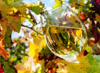 Fototapete - Weißwein zwischen den Reben genießen :)