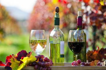 Fototapete - Pfälzer Weinprobe im Weinberg :)