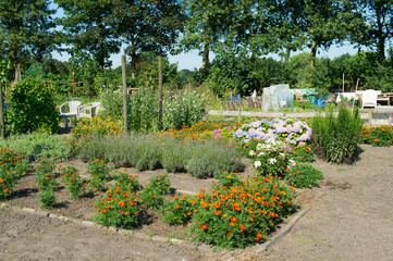 Vegetable garden with flowers in summer