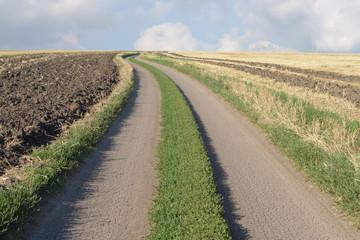 Dirt road through the fields.