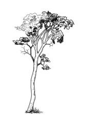 Vintage black tree