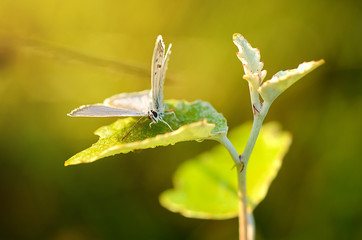Amazing butterfly at early morning