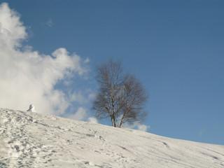 Paesaggio alpino innevato