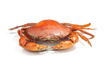Large steamed crab cooked in red on a white background.
