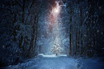 Foto auf Acrylglas Schwarz Weihnachtsbaum