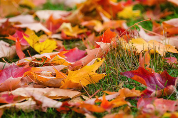 Colorful autumn leaves nature background