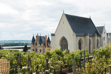 vineyard in Angers Castle, France
