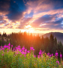 Fototapete - Beautiful autumn landscape in the mountains with pink flowers.
