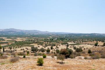 Cretan landscape with olive trees. Crete, Greece.