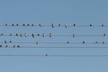 Birds on a wire - Stock Image.