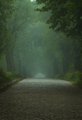 Recess Fitting Khaki Foggy old road between green trees