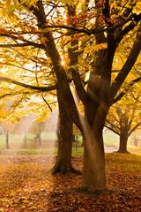 Sunset in autumn park.