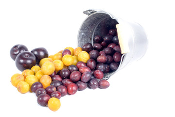 red and yellow plums into a small bucket