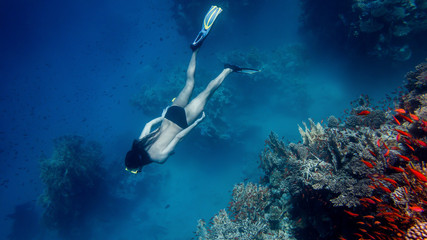 Free Diver in the Reef