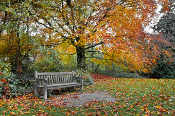 Wall Mural - Bench in autumn park.