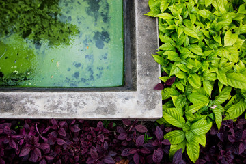Natural Green and purple leaves border