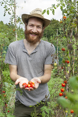 young bearded  boy farmer who gathers tomatoes from plants