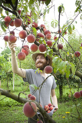 young boy farmer who gathers peaches from the tree