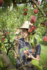 young farmer woman who gathers and taste fresh peaches from tree