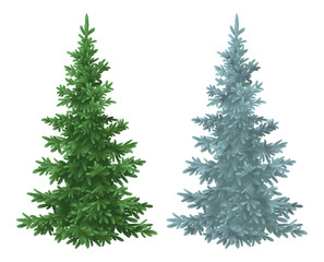 Christmas green and blue spruce fir trees
