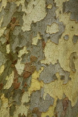 Canvas Prints Old dirty textured wall Texture of a tree bark
