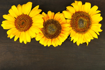 Beautiful sunflowers on wooden background