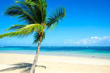 Einsamkeit: Karibischer Traumstrand :)