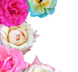 Isolated Roses Border