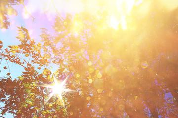 abstract photo of light burst among trees and glitter bokeh ligh