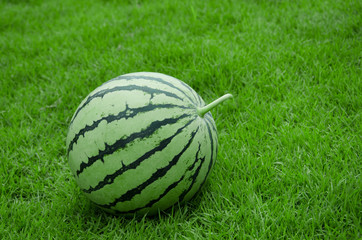 Watermelon stripe skin