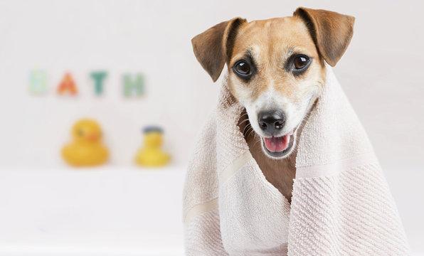 Bathroom towel dog
