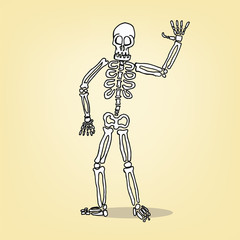 cartoon skeleton