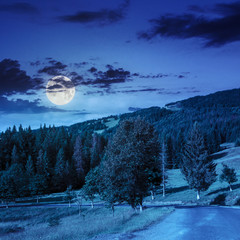 going to coniferous forest at night