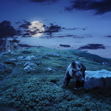 bear near the castle on the hillside at night