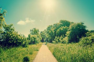 Sunshine over a nature path