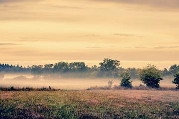 Misty meadow landscape