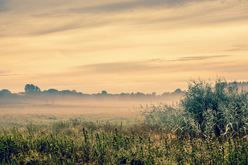 Sunrise over a misty field