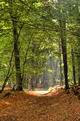 In the Forest of Darss