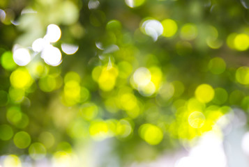 green bokeh from tree, green background