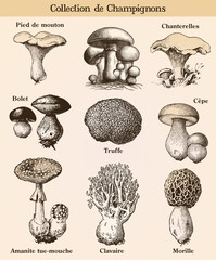 Mushroom collection with french text