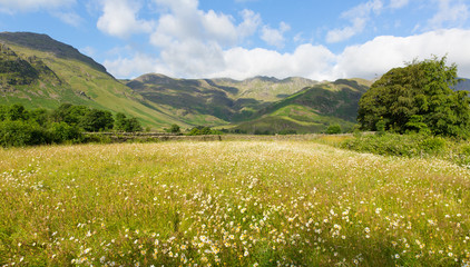 Daisy field mountains & blue sky Langdale Valley Lake District