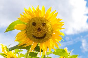 Wall Mural - Sunflower face