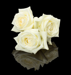 Three white bud roses on the black background