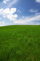 Green field with clear blue sky and clouds